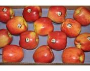 Táo Ambrosia Mỹ size 72