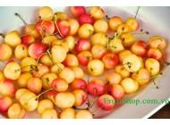 Cherry vàng Mỹ
