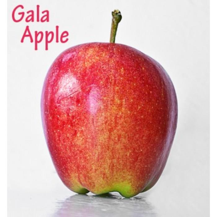 Kết quả hình ảnh cho táo gala mỹ