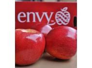Táo Envy Mỹ size 40