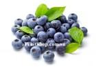 Việt quất xanh Mỹ - Blueberry USA