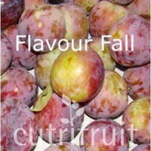 Hoa quả nhập khẩu, Mận Úc - Flavour Fall Plums