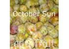 Mận October Sun Úc