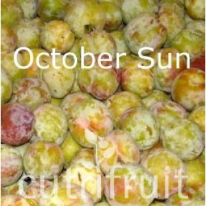 Mận October Sun Úc - October Sun Plum